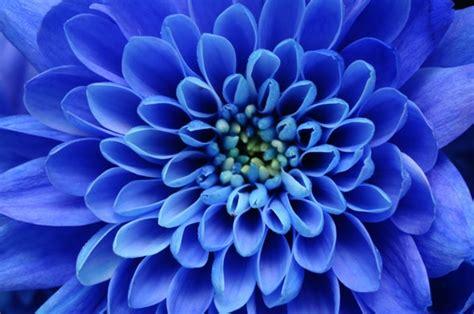 blaue blumen frühling welche bedeutung hat die blaue blumen