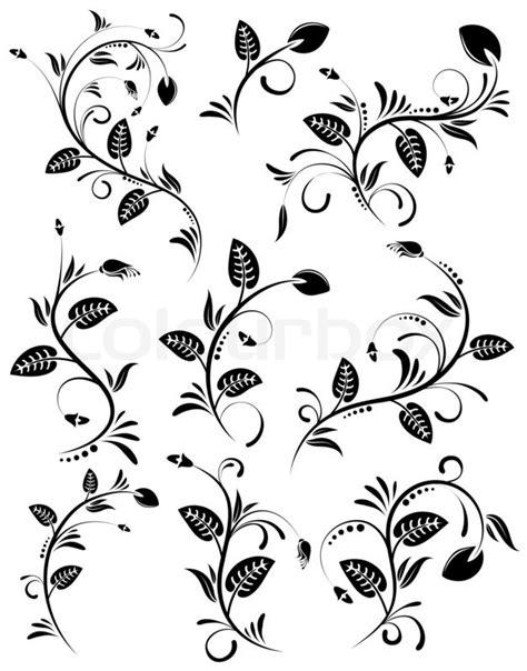 Kleurplaat Acanthus by Sammeln Blumenbeete Stockfoto Colourbox