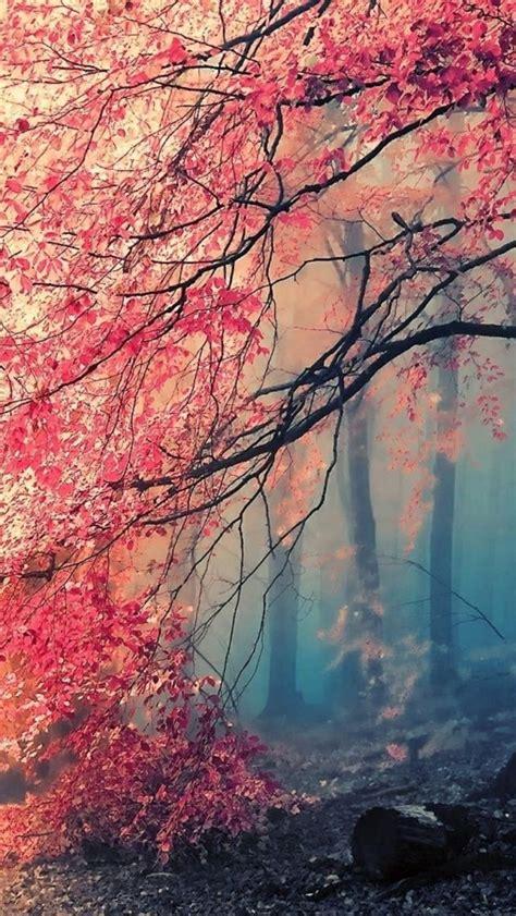 Beautiful Tree Phone Wallpaper by Wallpaper 640x1136 Tree Fog Nature Beautiful