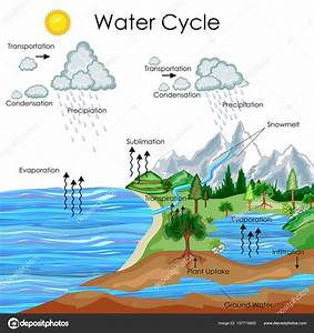 Water Cycle Biology Diagram