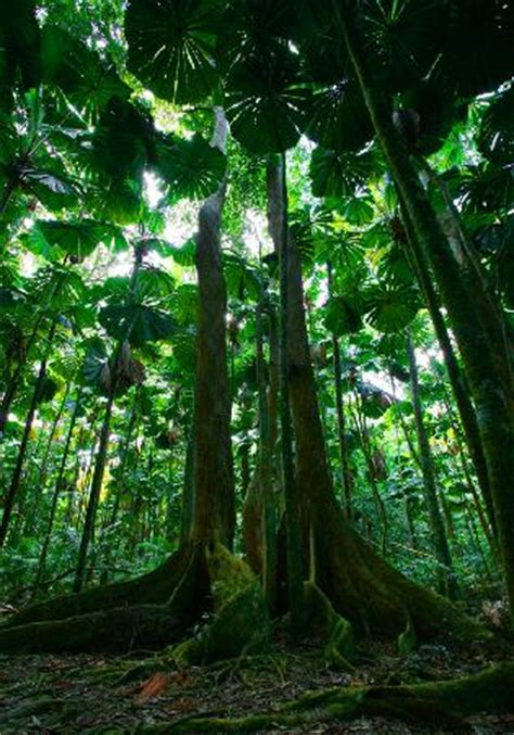 daintree rainforest cooper creek wilderness cape