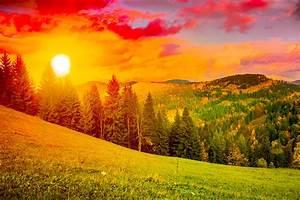 Ukraine, Scenery, Sunrises, And, Sunsets, Mountains, Carpathians, Fir, Sun, Grass, Nature