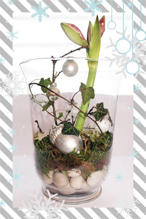amaryllis im glas mit moos weihnachtsdeko im glas videkiss deko glas weihnachten und weihnachtsdekoration