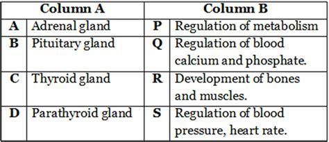class  biology control  coordination worksheets class