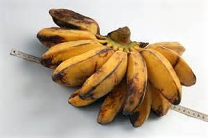 fruit holder file pisang jpg wikimedia commons