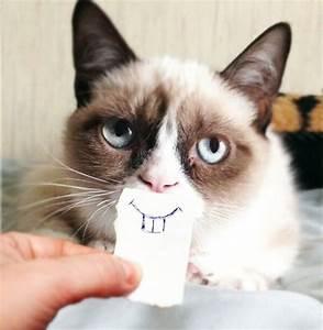 [Image - 459429] | Grumpy Cat | Know Your Meme