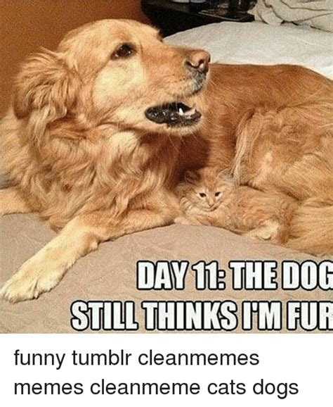 DAY 11 THE DOG STILL THINKS MRUR Funny Tumblr Cleanmemes