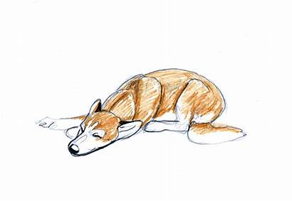 Dog Animation Sleeping Animated Gifs Giphy