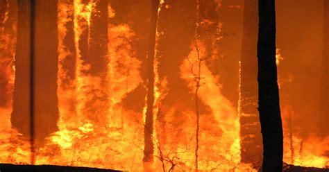 bushfires bushfire greens australian