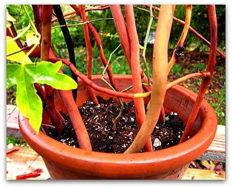 How To Make A Trellis For Your Potted Plants  Tall Clover