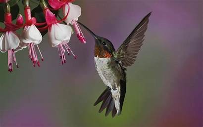 Bird Flower Birds Background Flowers Desktop Pc