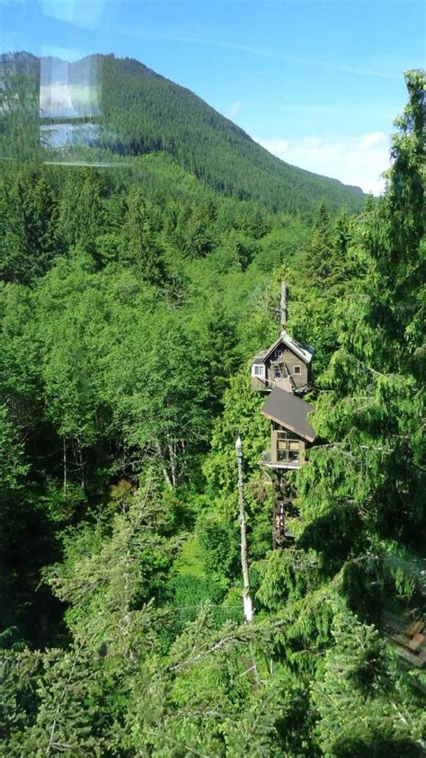cedar creek treehouse washington gems hidden forest evergreen onlyinyourstate rainier state tree these wa most away mt treehouses mount awesome