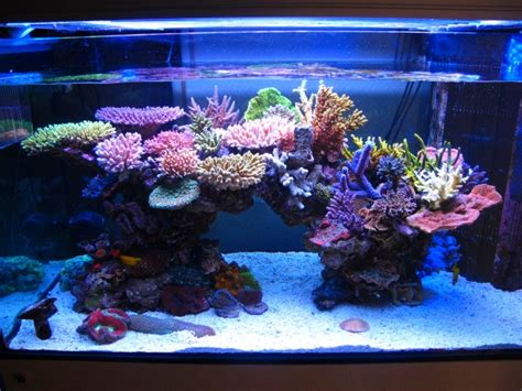 Reef Aquarium Aquascaping by Minimini S Zeovit Tank In Japan Reef Builders The Reef