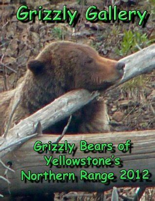 grizzly gallery grizzly bears  yellowstones northern range   ron chester