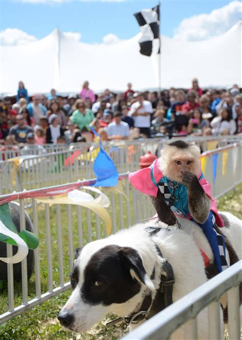 county fair funny quotes quotesgram