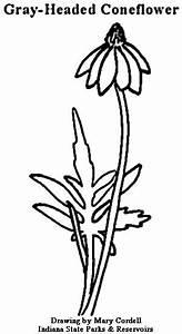 Calendar Free Print Dnr Coloring Pages Plants
