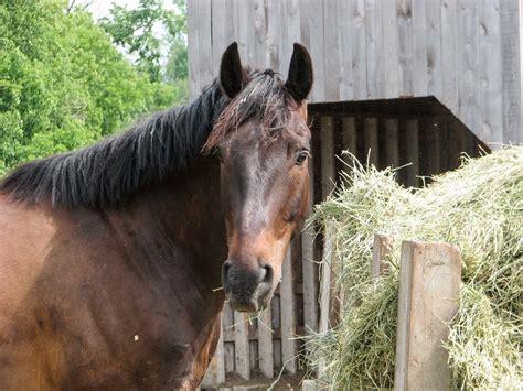 magengeschwuer beim pferd ergebnis unbemerkter