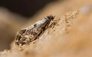 Mites Alimentaires Cycle De Reproduction : traitement mites de bois et mites alimentaires bordeaux ~ Dailycaller-alerts.com Idées de Décoration