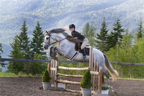 horse andalusian facts most important lover know jumping horses temperament