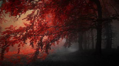 crimson forest  wallpaper engine