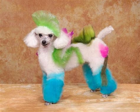 crazy dog grooming ideas  wont