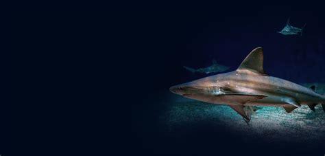 plus grand aquarium d europe bienvenue acquario di genova
