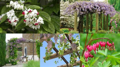piante sempreverdi per terrazzo piante da terrazzo ricanti