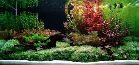The Gallery For > Freshwater Aquarium Decorating Ideas