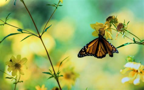 Animated Butterfly Wallpaper Free - animated butterfly wallpapers top free animated