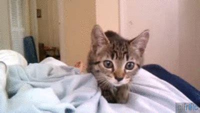 kitten waits  jumps  camera gifrific