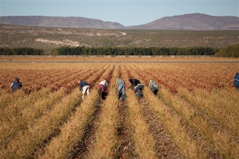 A Plentiful Harvest - Catholic Stories