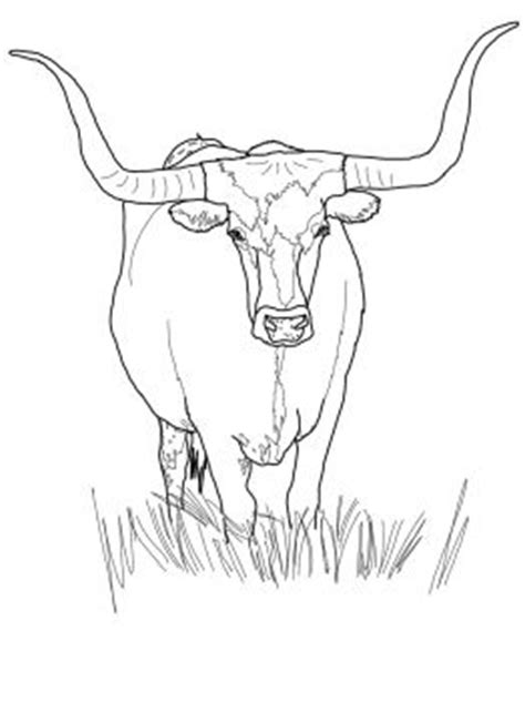 texas longhorn cattle  coloring pages longhorn