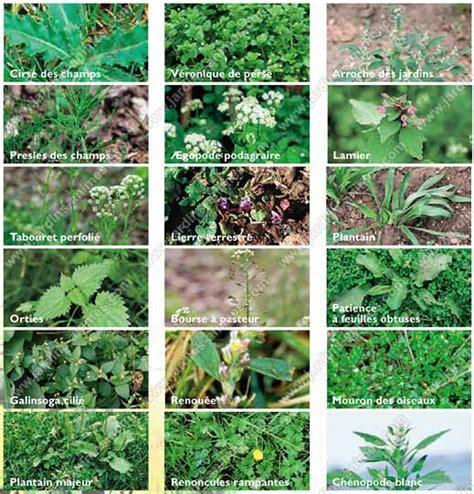 Liste Mauvaises Herbes Jardin voici comment vous pouvez vous d 233 barrasser des mauvaises