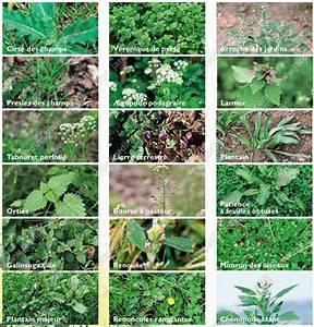 Desherbant Mauvaise Herbe : entretien pelouse mauvaises herbes accueil design et ~ Premium-room.com Idées de Décoration