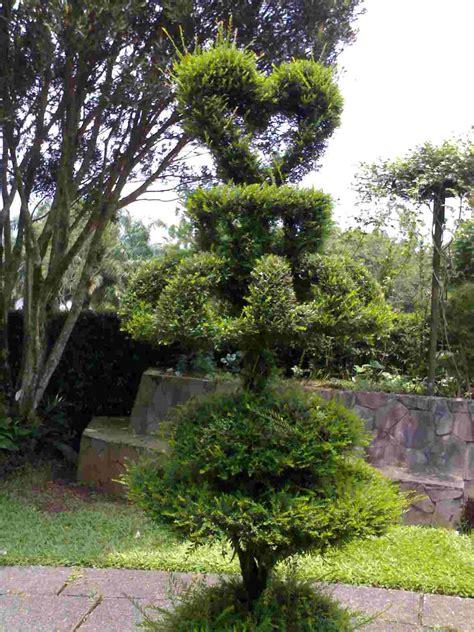 inspirasi taman minimalis lahan sempit sederhana