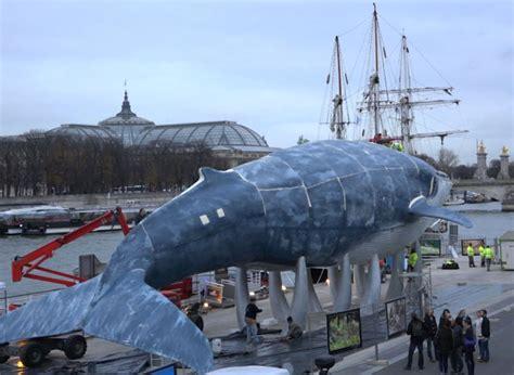 bureau photographe vidéo le projet quot la baleine bleue quot à un symbole de