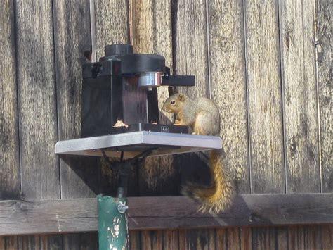espresso birdsquirrel feeder instructables