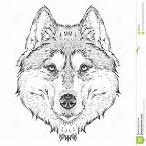 Hand Draw Husky Portrait Hand Draw Vector Illustration