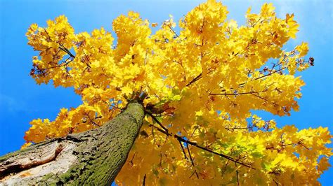 Aesthetic Autumn Wallpapers Desktop by Yellow Aesthetic Wallpapers Top Free Yellow Aesthetic
