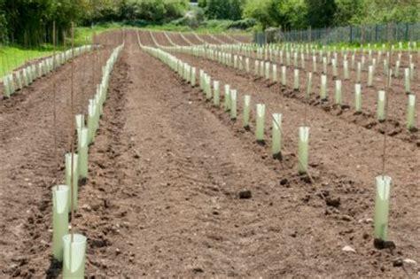 baum stecklinge ziehen birnbaum vermehren 187 diese m 246 glichkeiten gibt es