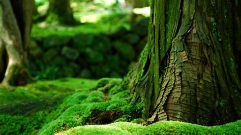 Wallpaper Green Nature by Green Nature High Quality Wallpaper Free