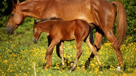 mare nice foal nature horse horses landscape hd wallpaperbetter