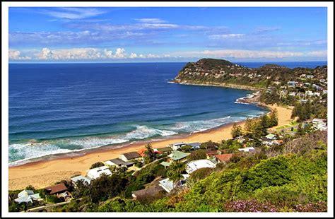 whale beach  photo   south wales east trekearth