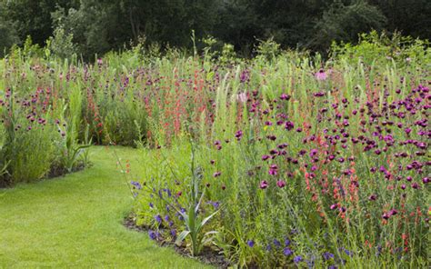 meadow gardens how to sow your own exotic meadow telegraph
