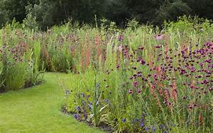 How to sow your own exotic meadow - Telegraph