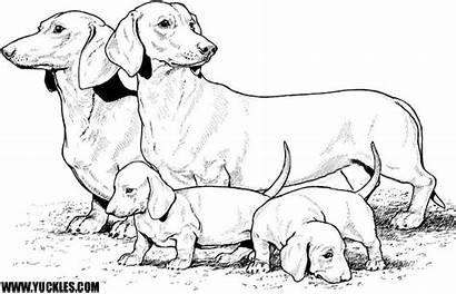 Coloring Chien Dog Teckel Coloriage Colorear Perro