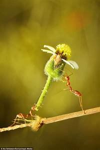 Ant Appears To Be Giving Its Friend A Flower As A Gift In