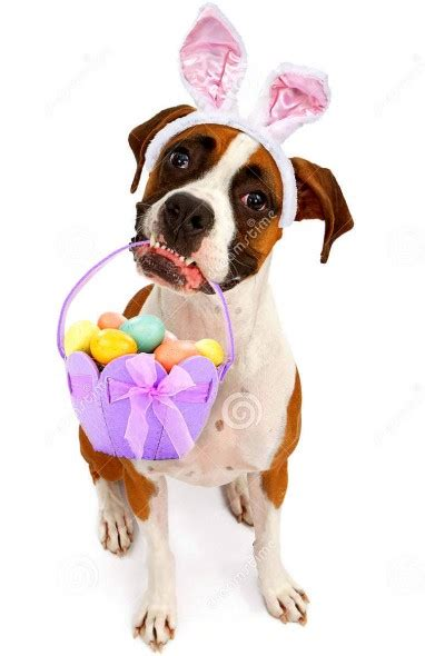 dogs     thrilled   easter
