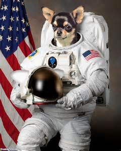 Doge Astronaut (page 3) - Pics about space