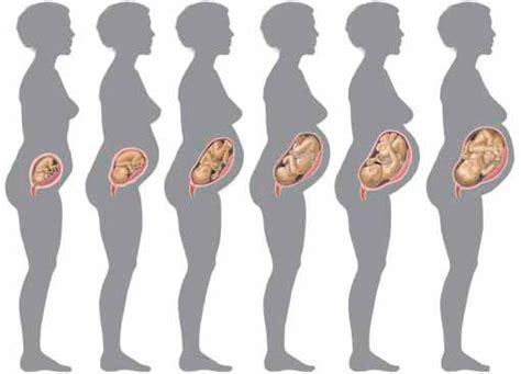 9 mois de grossesses b 233 b 233 moi grossesse accouchement naissance du b 233 b 233 courbe de